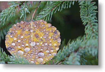 Fall Ornament Metal Print by Shirley Mailloux