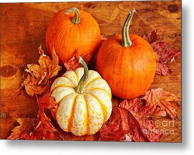 Fall Pumpkins And Decorative Squash Metal Print