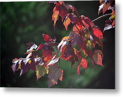 Fall Red Metal Print by Sandi OReilly