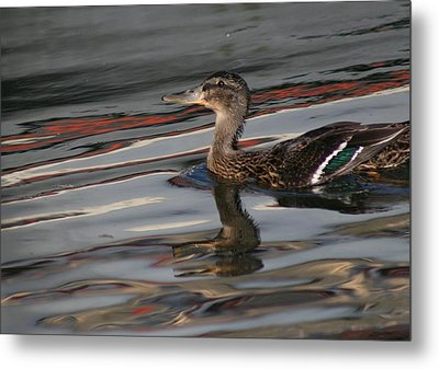 Fall Reflections And Duck Metal Print by Valia Bradshaw