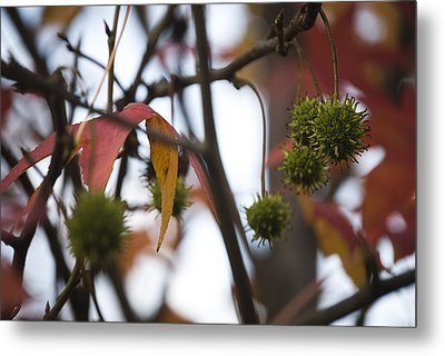 Fall Seeds Metal Print by Lisa Missenda
