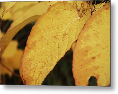 Fall Sunshine Metal Print by Terrie Taylor