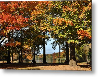 Fall Trees And Lake Metal Print by Diane Lent