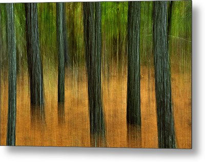 Metal Print featuring the photograph Fall Trees by Tamera James