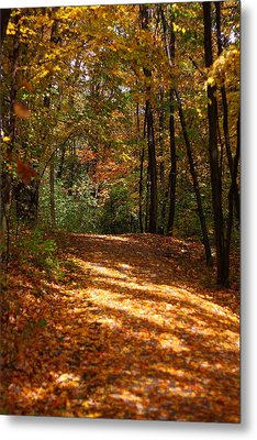 Fall Woods Metal Print by Kevin Schrader