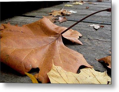 Fallen Leaf Metal Print by Jack Schultz