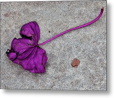 Fallen Purple Leaf Metal Print by Robert Ullmann