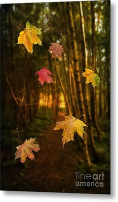 Falling Leaves Metal Print by Amanda Elwell