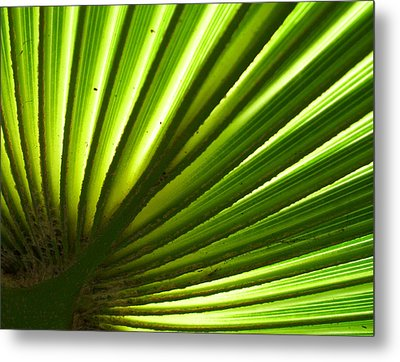 Metal Print featuring the photograph Fan Frond by Ginny Schmidt