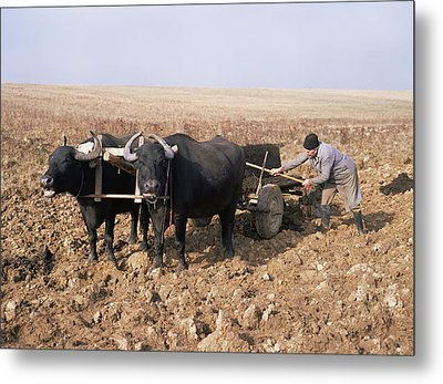 Farmer Fertilising A Field Metal Print by Bjorn Svensson