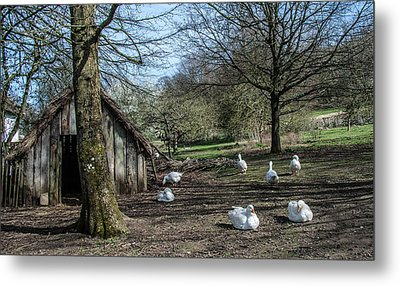 Farmyard Geese Metal Print by Dawn OConnor