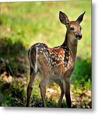 Fawn Toddler Metal Print by Nava Thompson