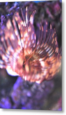Metal Print featuring the photograph Feather Duster  by Puzzles Shum