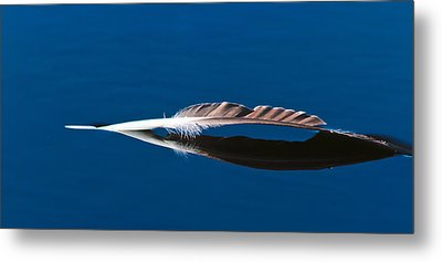 Feather Metal Print by Mitch Shindelbower
