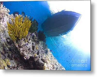 Feather Stars With A Boat Metal Print