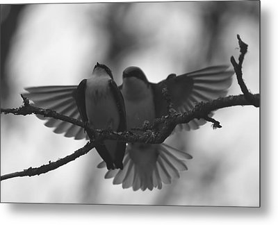 Feathered Encounter Metal Print by Angie Vogel