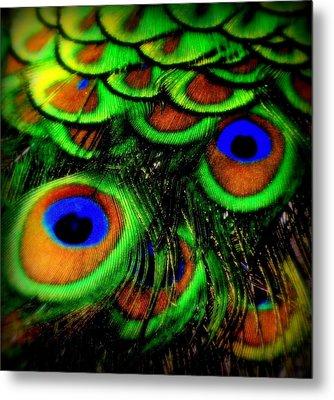 Feathers Metal Print by Karen Wiles