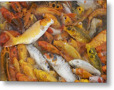 Feeding Frenzy Metal Print