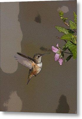 Feeding Rufus Hummingbird- Abstract Metal Print by Tim Grams