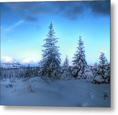 Metal Print featuring the photograph Feeling Blue by Michele Cornelius