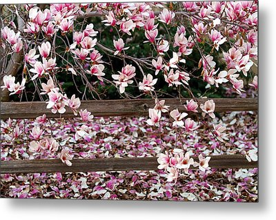 Metal Print featuring the photograph Fence Of Flowers by Elizabeth Winter