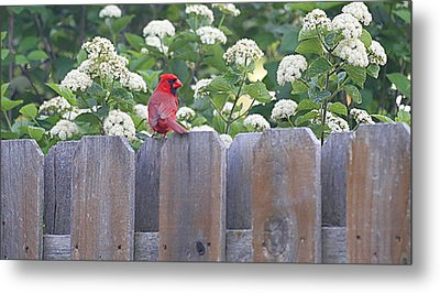 Metal Print featuring the photograph Fence Top by Elizabeth Winter