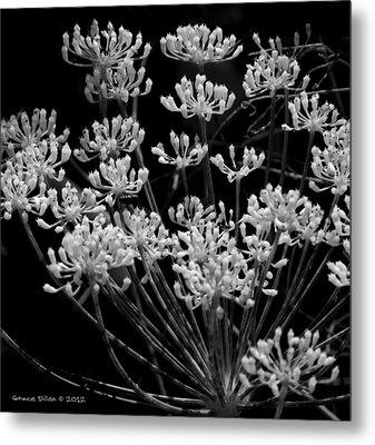 Fennel Flowers Metal Print by Grace Dillon
