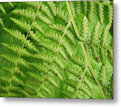 Fern Green Metal Print