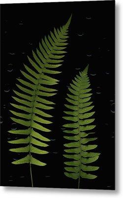 Fern Leaves With Water Droplets Metal Print by Deddeda