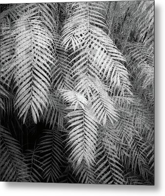 Fern Variations In Infrared Metal Print by Andreina Schoeberlein