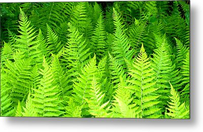Ferns Galore Filtered Metal Print
