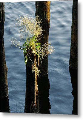 Fertile Ground Metal Print