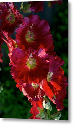 Metal Print featuring the photograph Fertile by Joseph Yarbrough