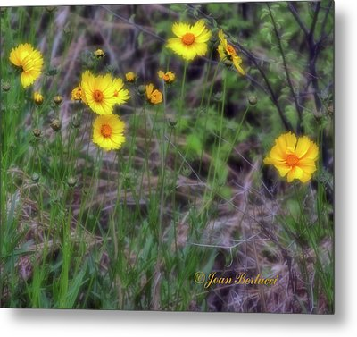 Metal Print featuring the photograph Field Flowers by Joan Bertucci