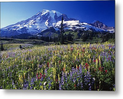 Field Of Blooming Wildflowers In Metal Print by Natural Selection Craig Tuttle