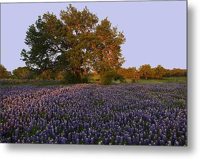 Metal Print featuring the photograph Field Of Blue by Susan Rovira