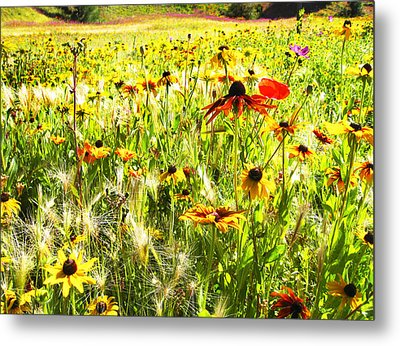 Field Of Bright Colorful Wildflowers Metal Print