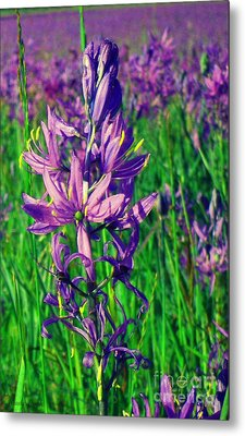 Metal Print featuring the photograph Field Of Camas In Oregon by Mindy Bench