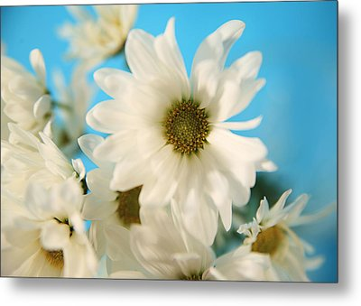 Field Of Daisies Metal Print by Mary Broughton