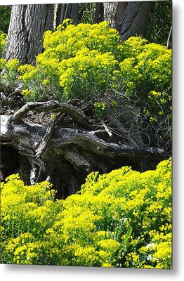 Metal Print featuring the photograph Field Of Flowers 2 by Gerald Strine