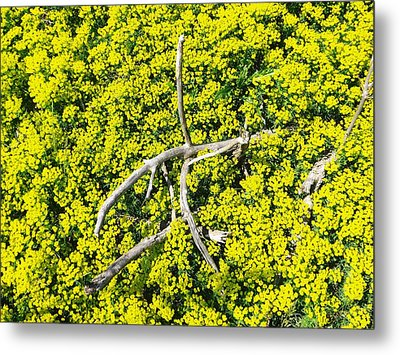 Metal Print featuring the photograph Field Of Flowers 3 by Gerald Strine