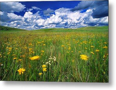 Field Of Flowers, Grasslands National Metal Print by Robert Postma