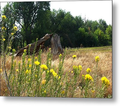 Field Of Yellow Sage In Lakewood Colorado Metal Print by Gretchen Wrede