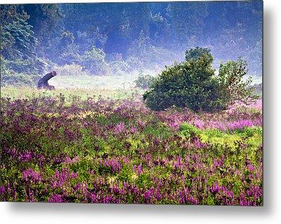 Field With Purple Flowers Metal Print by Brian Lee