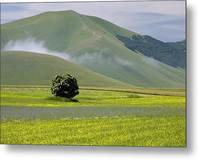 Fields Full Of Cornfield Weeds Metal Print by Bob Gibbons