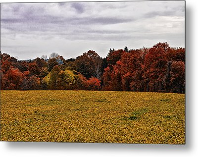 Fields Of Gold Metal Print by Bill Cannon