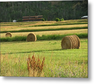 Fields Of Gold Metal Print by Shawn Hughes