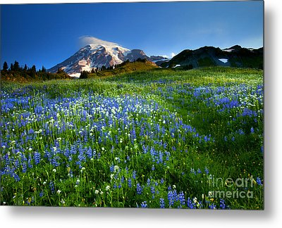 Fields Of Paradise Metal Print by Mike  Dawson