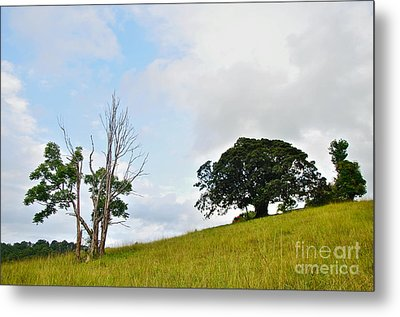 Fig Tree On A Hill Metal Print by Kaye Menner