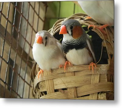 Finches In Their Nest Metal Print by Arindam Raha